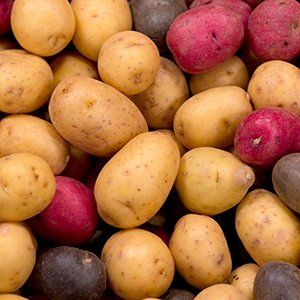 CSU Potato Program - CSU Ventures Impact Stories