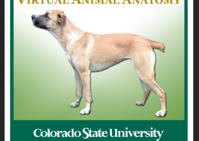 Virtual Animal Anatomy